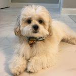puppy sold